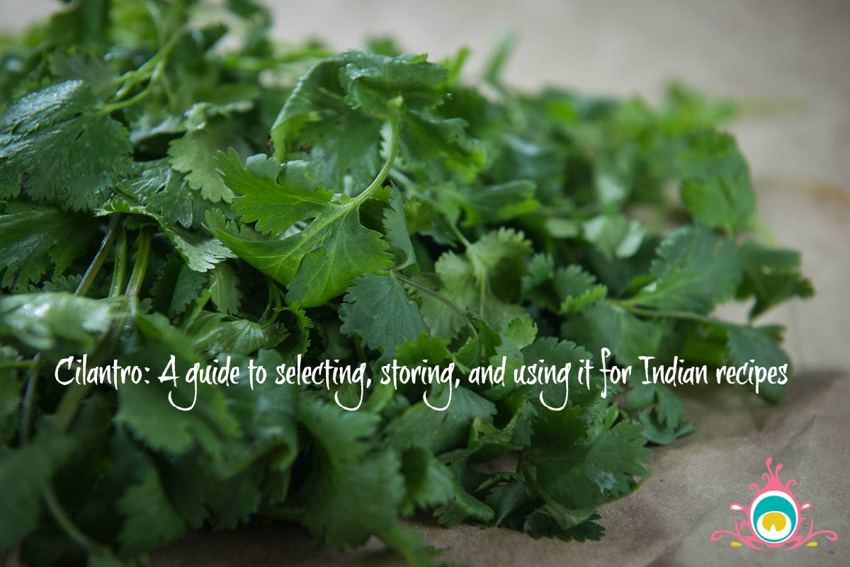 cilantro in indian food