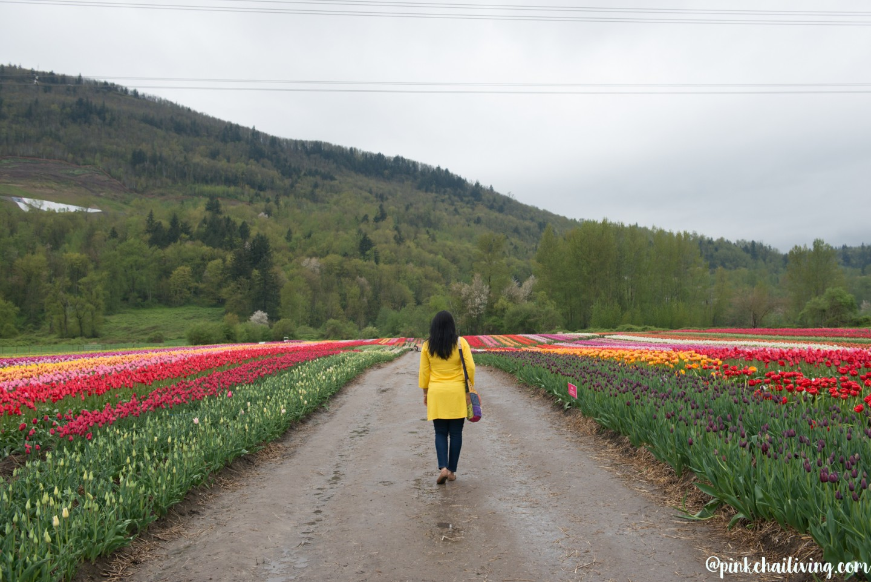 abbotsford bloom tulip festival